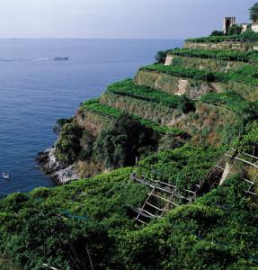 Caratteristici terrazzamenti in Costiera. (Erchie)