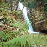 Nella Valle delle Ferriere crescono gli ultimi esemplari della Woodwardia radicans, una felce risalente all'epoca delle glaciazioni, che qua sopravvive ancora grazie al particolare tipo di ambiente fresco e umido.